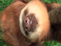 Potty training at the sloth orphanage
