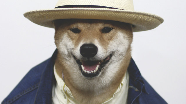 Menswear Dog is the world's coolest canine.