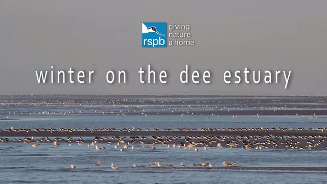Winter on the Dee Estuary - RSPB Documentary