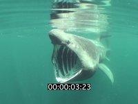 2009 07 DAN BURTON BASKING SHARKS