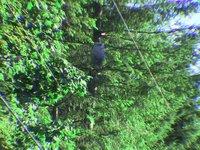 A Day With Raggie - TEAM GREEN - CLBC - YARDWASTE