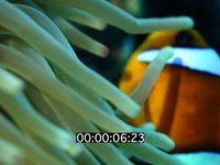 2013 06 MER ROUGE MACRO 6604