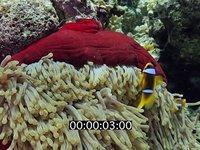 2013 06 MER ROUGE MACRO 7068