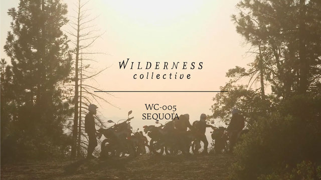 WILDERNESS COLLECTIVE | WC-005 | Sequoia