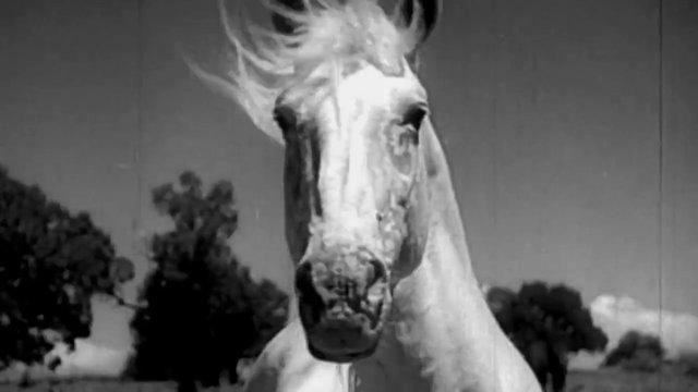 """Wild Stallions"" Trailer: Meathead FIlms"