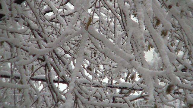 First Snow 2014 On Vimeo