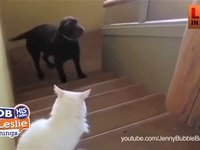Dogs scared to Pass Cats