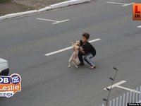 Boys Saves Dog In Traffic