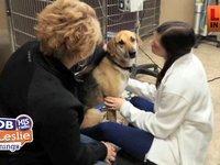 Pileup and a Dog Saved