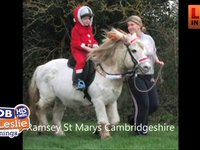 Family Lost Beloved Pony 'Tic Toc'