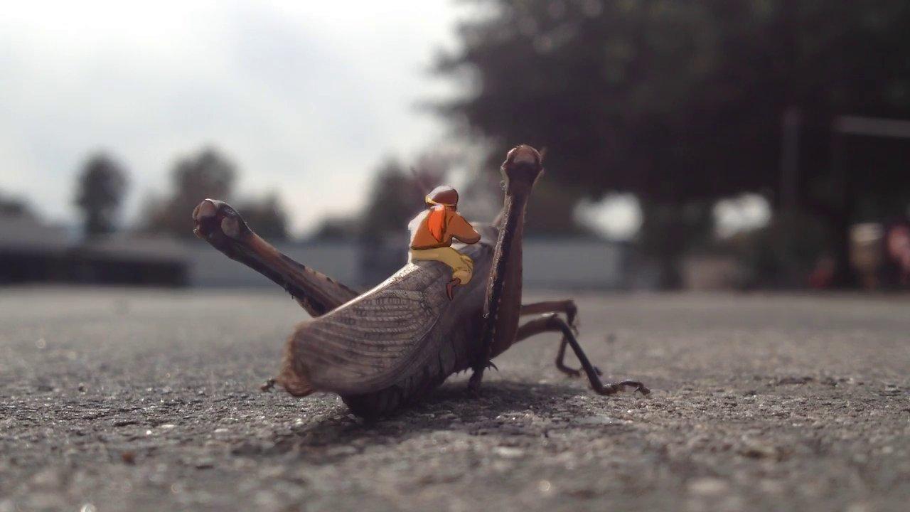【昆蟲航空的黃金年代 Golden Age of Insect Aviation】【Yao】