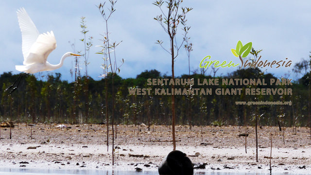 Sentarum Lake National Park West Kalimantan Giant Reservoir