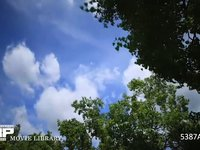 青空と雲の微速度撮影 木の間から見上げた空