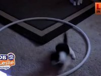 How do you Get your Cat to workout? How About A Hula Hoop
