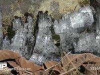 霜柱 微速度動画 霜柱が溶ける