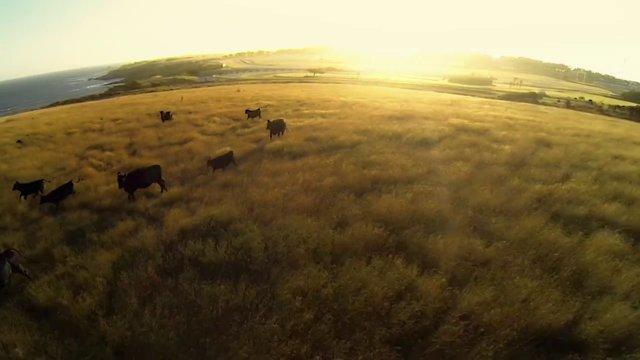 TripConnexion filme du ciel l'Australie