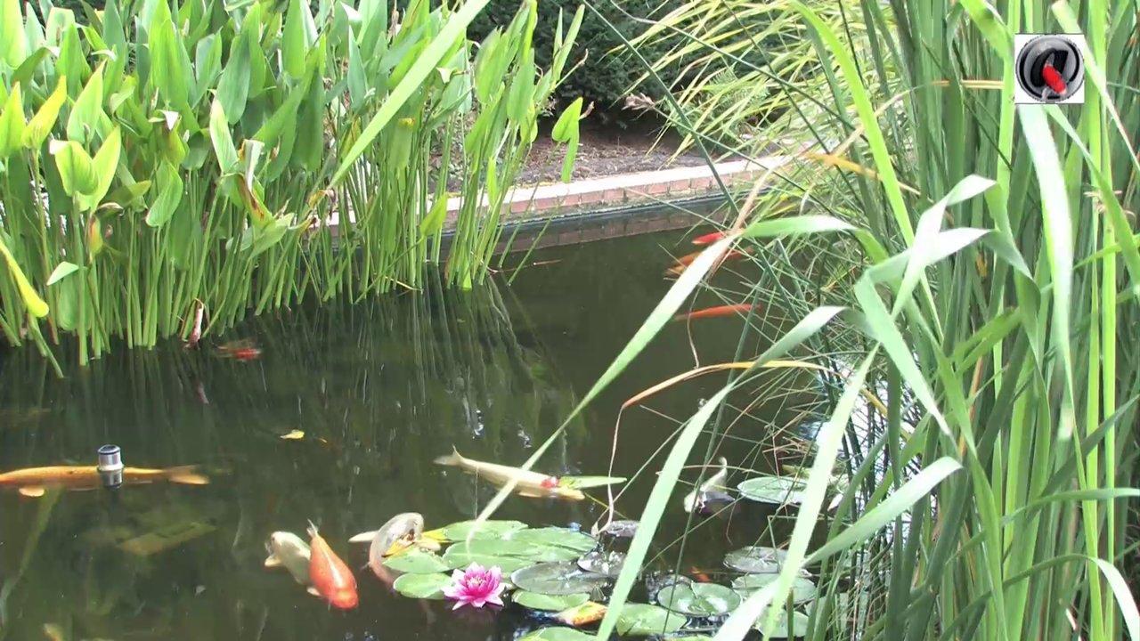 Le bassin de jardin de boudha on vimeo for Bassin de jardin com