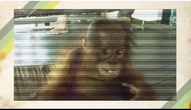 Anima i DR's Tabersagen 12. februar 2014 on Vimeo