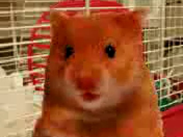 hairy the hamster