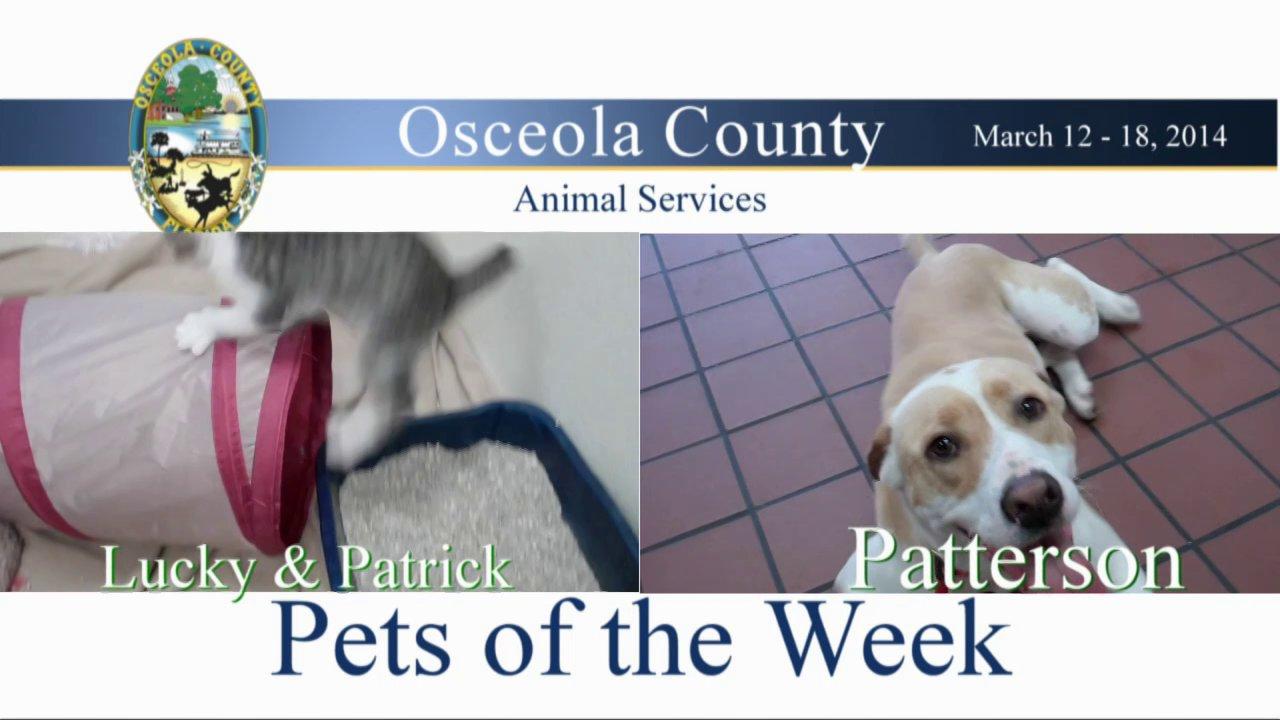 Osceola County Dog Parks