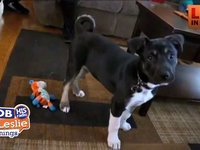 Adopted Puppy Saves Family Life