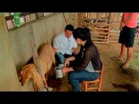 Conheça uma das várias criações de ovinos e caprinos existentes em Tauá que dão à cidade a fama de terra do bode.