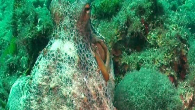 <p> Diving in Spain</p>