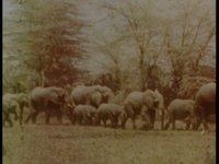 ELEPHANTS' TEST