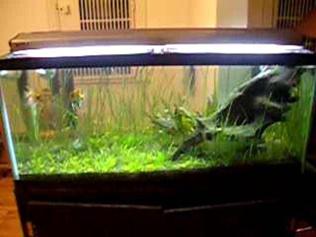 75 Gallon Aquarium Videos 75 Gallon
