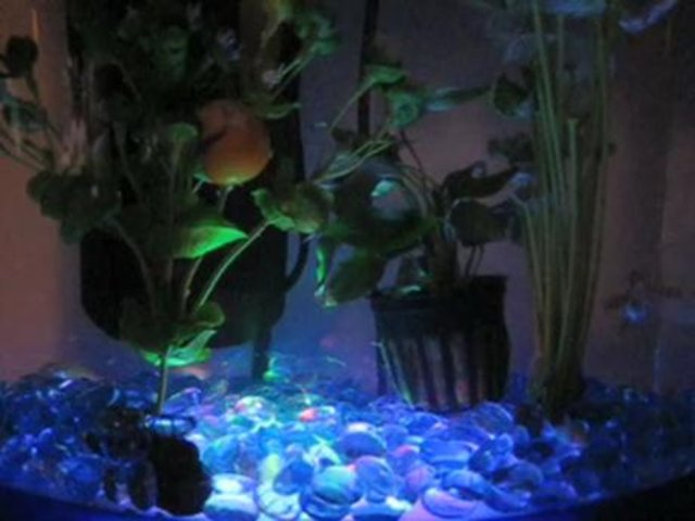 Aimee 39 s fish tank disco floor on vimeo for Floor fish tank