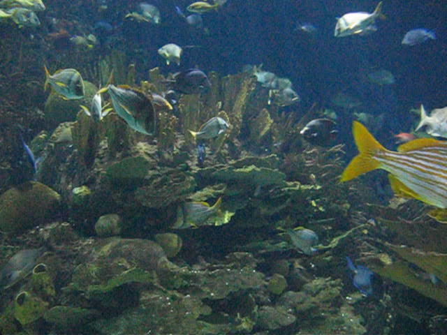 Valencias Aquarium : Aquarium Valencia on Vimeo
