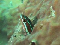 Ngedbus - Palau (Indonesia)