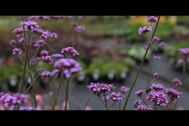 Okapi Garden Design on Vimeo