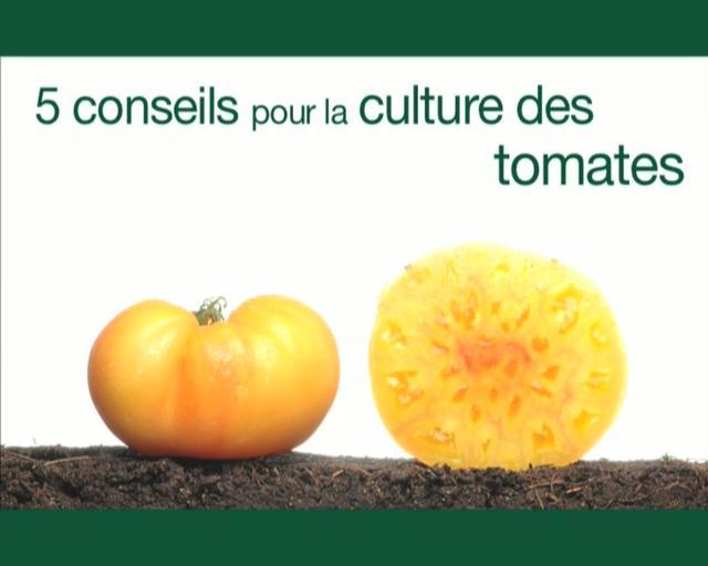 5 conseils pour la culture des tomates on vimeo - Culture de la truffe ...