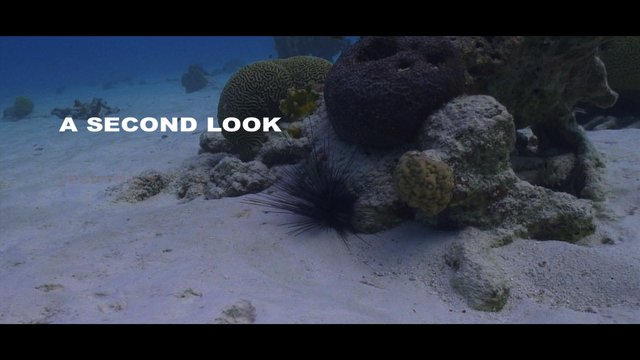 A Second Look--Reef Ecology