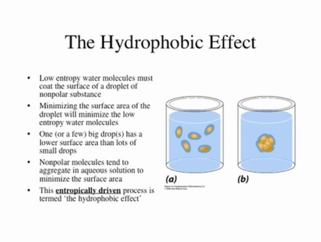 Biochemistry Lecture Jan 26 2009 - Water (cont)