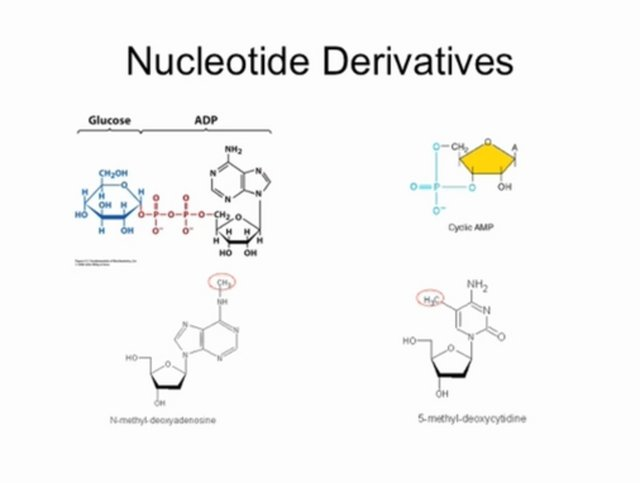 Biochemistry Lecture - Feb 2 2009 - Nucleotides and Nucleic Acids - Part 1