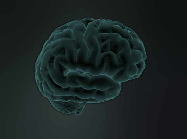 brain function animation free download