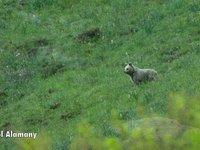BRU: Doce días con el oso de los Pirineos