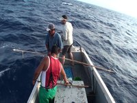 Big Yellowfin Tuna on bamboo - Ascension Island 2010