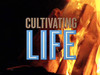 Cultivating Life  Portrait of WaterFire