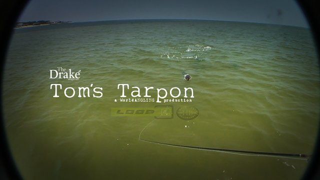 Tom's Tarpon: Fly Fishing For Tarpon