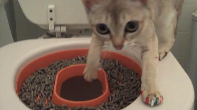 Cat toilet training setp2 on vimeo for Commode kitty