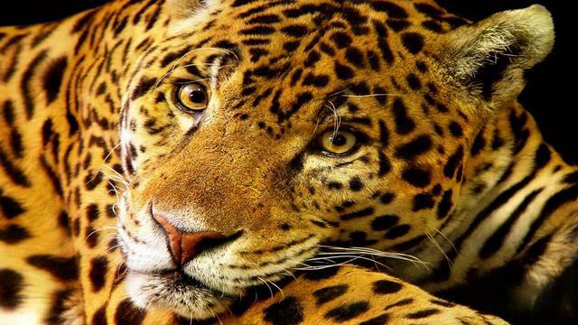 Mayan Jaguars On Vimeo