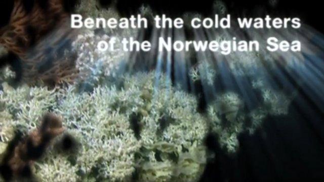 Norwegian Coral Reefs Threatened