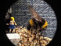 's werelds kleinste film gemaakt met een nokia n8