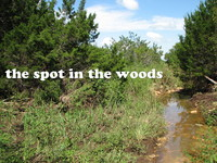 the spot in the woods