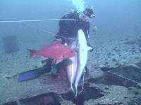 Pesca di frodo con attrezzatura A.R.A.