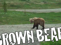 BROWN BEAR!