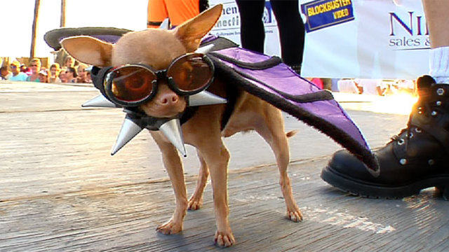 2010 fantasy fest pet masquerade in key west on vimeo